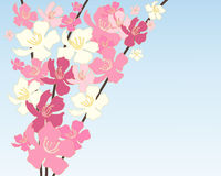 Chinese blossom Royalty Free Stock Photo