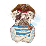 Illustration of pirate pug dog .on blue background in vector eps10 Royalty Free Stock Photo