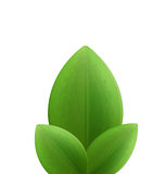 Illustration of plant three realistic  green leaves isolated on Royalty Free Stock Images
