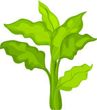 Illustration plants and vegetable Royalty Free Stock Photo