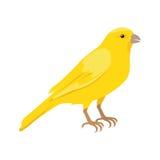 Illustration plate jaune canari de vecteur de conception illustration libre de droits