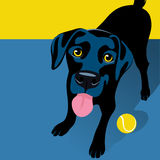 Illustration of playful Black Labrador Retriever with tennis ball Stock Photos