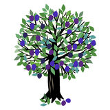 Illustration Plum tree Royalty Free Stock Image