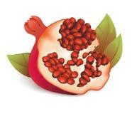 Illustration of pomegranate. Royalty Free Stock Photos