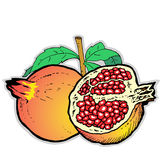 Illustration  of Pomegranates. Illustration of Pomegranates on a white background Royalty Free Stock Photo
