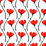 Illustration with poppy flowers isolated on white background. Summer background. Blooming flower spotlight Royalty Free Stock Photo