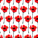 Illustration with poppy flowers isolated on white background. Summer background.  Royalty Free Stock Photography