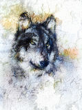 Illustration Portrait of a Wolf, crackle background Stock Photography
