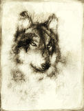 Illustration Portrait of a Wolf, crackle background. vintage picture. Royalty Free Stock Photography