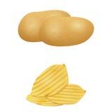 Illustration of potato . Stock Images