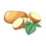 Illustration potato on white. Vector set of new  raw whole unpeeled and sliced potatoes with leaves   on white background Royalty Free Stock Images