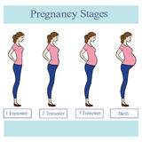 Illustration with pregnant women. Decorative background with pregnancy stages royalty free illustration