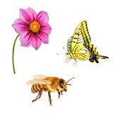 Illustration of Pretty bee, Old World Swallowtail Royalty Free Stock Photos