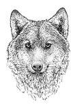 Illustration principale de loup, dessin, gravure, encre, schéma, vecteur illustration de vecteur