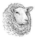 Illustration principale de portrait de moutons, dessin, gravure, encre, schéma, vecteur illustration stock