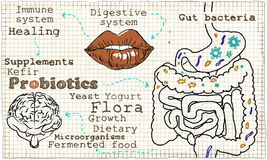 Illustration about Probiotics and the Digestive System Stock Images