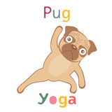 An illustration of pug doing yoga Royalty Free Stock Photo