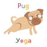 An illustration of pug doing yoga Royalty Free Stock Photography