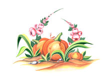 Illustration with pumpkin and mallow. Pumpkin and mallow. Hand drawing illustration for a card or book cover or magazine royalty free illustration
