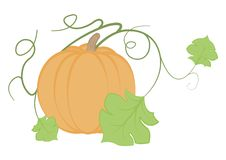 Illustration of pumpkin on a white background Royalty Free Stock Photography