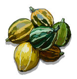 Illustration of pumpkins on a white background. Illustration isolated decorative pumpkin on white background Stock Image