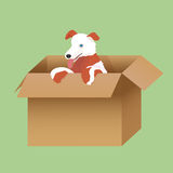 Illustration of puppy in the box. Illustration of red and white puppy in the box on green background Stock Image