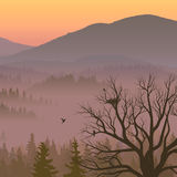 Illustration of purple valley with coniferous wood. Royalty Free Stock Photo