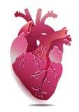Illustration réaliste de coeur d'isolement par vecteur sur le fond blanc ENV 10 Images stock