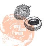 Illustration réaliste de fruit de litchi d'isolement sur le backgro blanc Image libre de droits