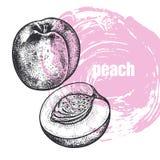 Illustration réaliste de fruit de pêche d'isolement sur le backgrou blanc Images stock