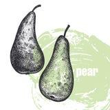 Illustration réaliste de fruit de poire d'isolement sur le backgroun blanc Photographie stock