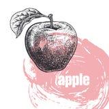 Illustration réaliste de fruit de pomme d'isolement sur le backgrou blanc Photo stock