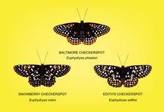 Illustration réglée de vecteur de Checkerspot de papillon Images libres de droits