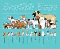 Illustration réglée de vecteur de bande dessinée de chiens de comparaison anglaise de taille illustration stock
