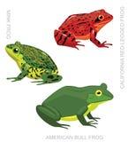 Illustration réglée de vecteur de bande dessinée de grenouille américaine de grenouille illustration de vecteur