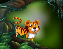 A rainforest with a tiger Stock Photography