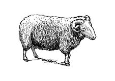Illustration of ram Royalty Free Stock Photography