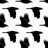 Illustration with raven in vector. Black and White seamless pattern.  Royalty Free Stock Photos