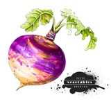 Purple swede isolated on white background. vector illustration