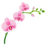 Illustration of realistic orchid. eps 10 Stock Photo