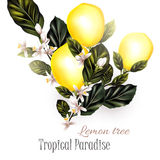 Illustration with realistic vector lemon on a blooming branches Royalty Free Stock Photo