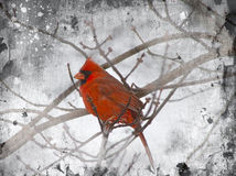Illustration - Red Cardinal Stock Image