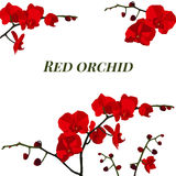 Illustration with red orchid. Royalty Free Stock Image