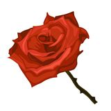 Illustration of red rose. On white background Royalty Free Stock Photo