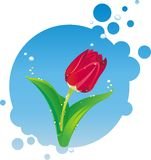 Illustration of red tulip Stock Images