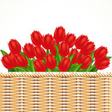 Illustration of red tulips. Royalty Free Stock Image