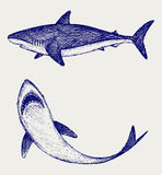 Illustration reef Shark Royalty Free Stock Photo