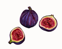 Illustration of Ripe Fresh Figs. Stock Images