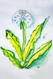 Illustration ripened dandelion seeds Stock Images