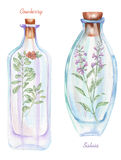 Illustration romantic and fairytale watercolor bottles with salvia flowers and cowberry branch inside Royalty Free Stock Photos
